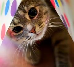 roztomilá kočička...