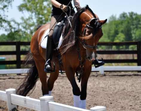 equestrian_ring
